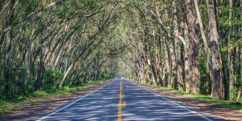 Imagem de uma rodovia rodeada de árvores